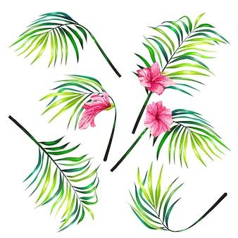 Conjunto de ilustrações vetoriais botânicas de folhas de palmeiras tropicais em um estilo realista.