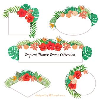 Conjunto de quadros com flores tropicais