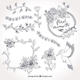 Conjunto de quadros e elementos naturais desenhados à mão