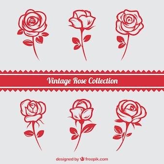 Conjunto de rosas desenhadas à mão