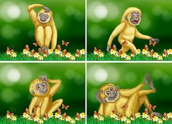 Cute gibbon em quatro cenas