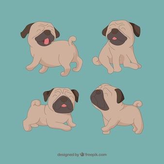 Cute pug dogs em poses diferentes
