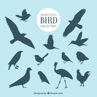 Delineia coleção de pássaros