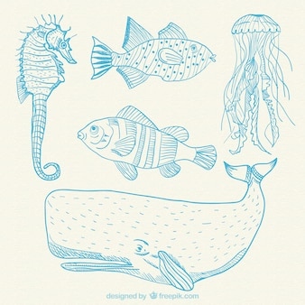 Desenhadas mão animais marinhos