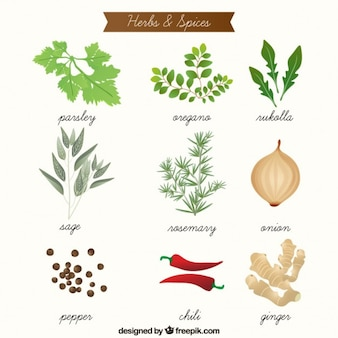 Desenhadas mão ervas aromáticas e especiarias coleção