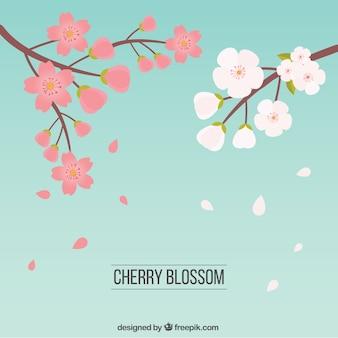 desenhadas mão flores de cerejeira em duas cores