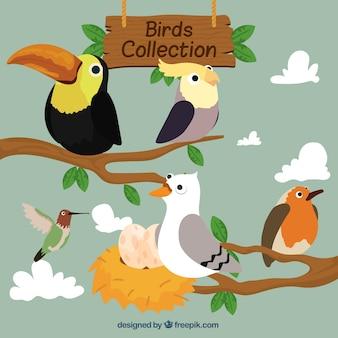 Desenhadas mão pássaros em ramos