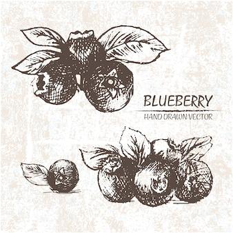 Desenhado mão blueberries