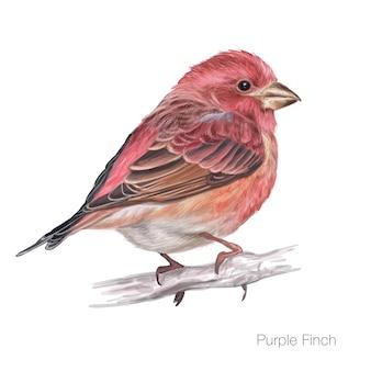 Desenho de mão de passarinho roxo