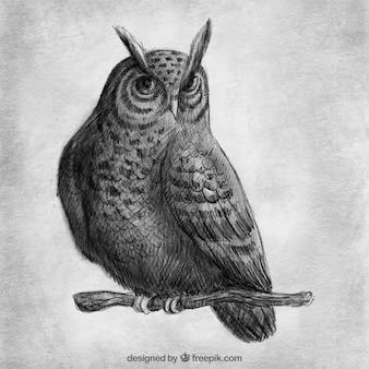 Desenho realista da coruja em um ramo
