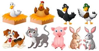Diferentes tipos de animais de fazenda
