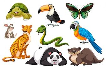 Diferentes tipos de ilustração de animais selvagens