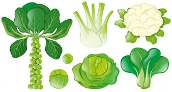 Diferentes tipos de vegetais verdes