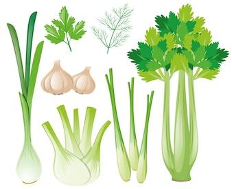 Diferentes tipos de vegetais