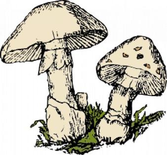 dois cogumelos