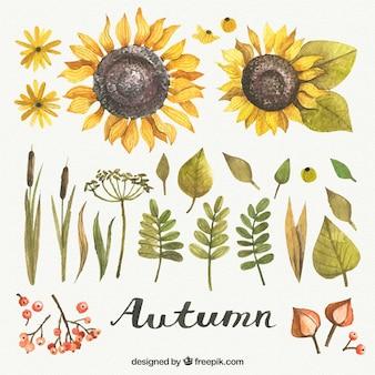 Elementos bonitas do outono