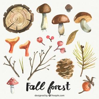 Elementos bonitos do outono pintados à mão