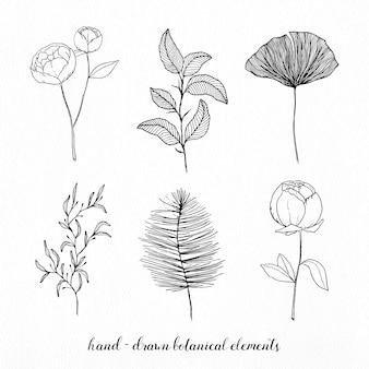 Elementos elegante botânicos desenhados mão