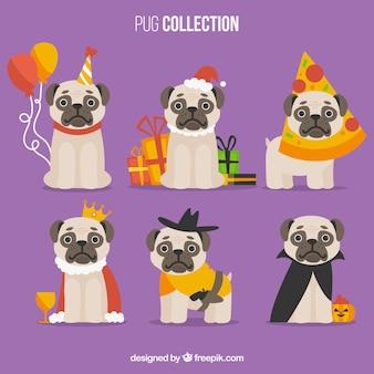 Engraçado conjunto de pugs lisos