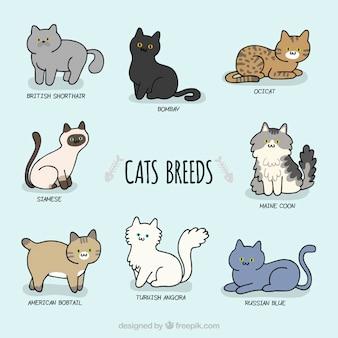 Esboçado raças bonitos do gato