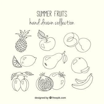 Esboços deliciosos frutos de verão