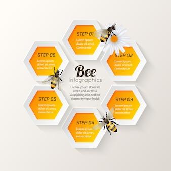 Etapas de infografia da abelha