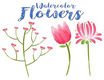 Flores de aguarela com três tipos diferentes de flores rosa
