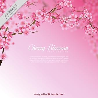 Flores de cereja fundo com efeito borrado