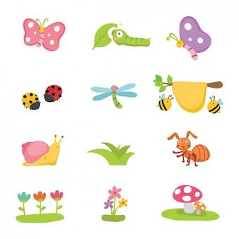 Flores e insetos coleção