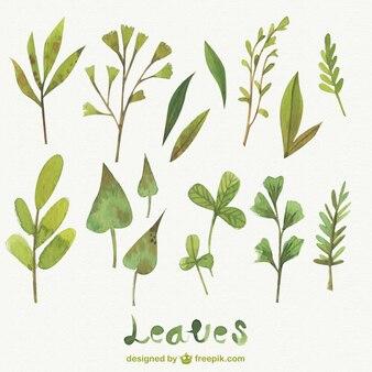 Folhas da aguarela pacote