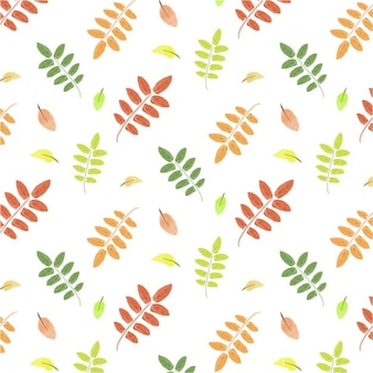 Folhas Padrão