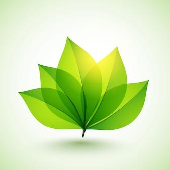 Folhas verdes brilhantes para o conceito de Natureza.