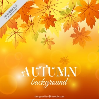 Fundo bonito do outono com efeito bokeh