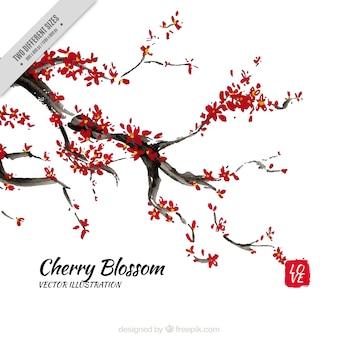 Fundo da aguarela das flores de cerejeira ramo