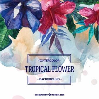Fundo da aguarela de flores tropicais