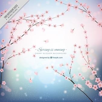 Fundo da flor de cerejeira com formas brilhantes