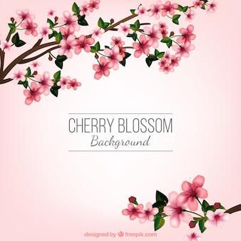 Fundo da flor de cerejeira