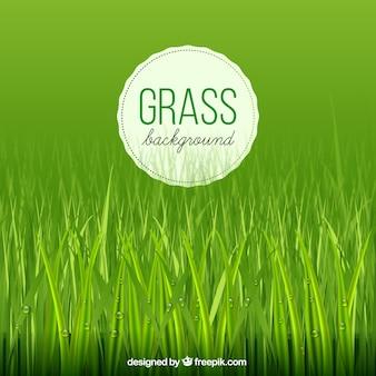 Fundo da grama com gotas da água