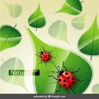 Fundo da natureza com o joaninha