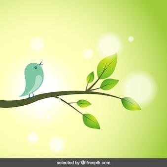 Fundo da natureza com pássaro em uma filial