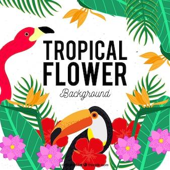 Fundo de flores tropicais com flamingo e toucan