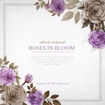 Fundo do vintage de rosas da aguarela