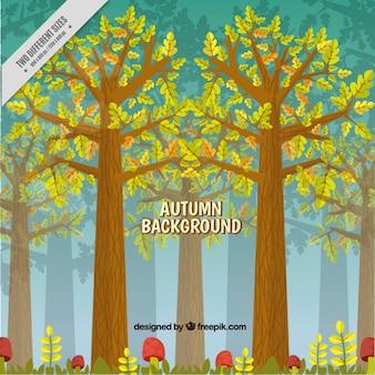 Fundo outonal bonita com árvores altas e cogumelos