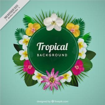 Fundo tropical no estilo realista