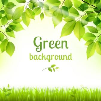 Fundo verde natural da folhagem fresca