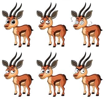 Gazela com diferentes expressões faciais