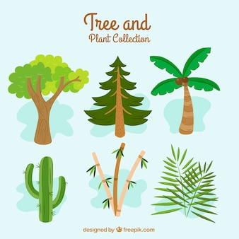Grande recolha com diferentes tipos de árvores