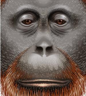 Ilustração, orangotango