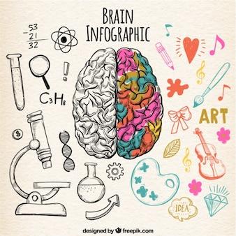 Infográfico cérebro humano fantástico com detalhes de cores