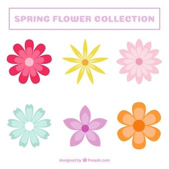 Jogo de flores decorativas coloridas